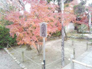 2013嵐山2.jpg